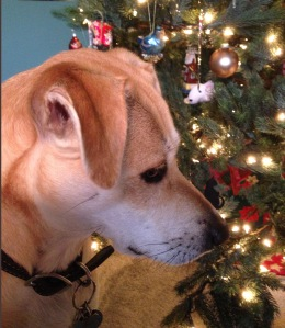 Harper reflects on the true meaning of Christmas