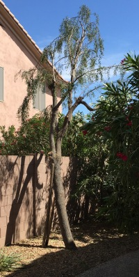 Tree 3a